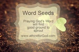 word seeds